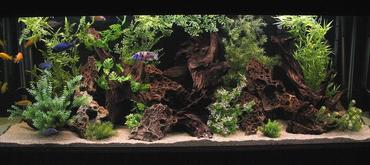 Choosing the right location is the key to a healthy freshwater tank.