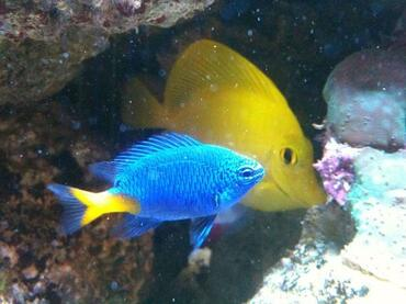If you purchase your saltwater fish online you may have a larger variety of species to choose from.