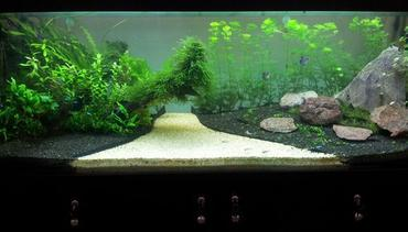Cultivating an Amazon Biotope Tank
