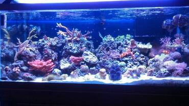 Common Saltwater Aquarium Fish Diseases