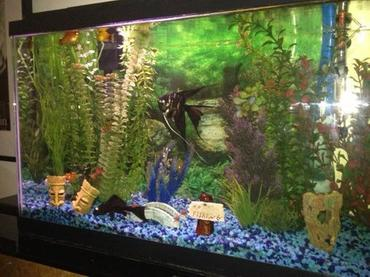 Selecting a Background for your Freshwater Tank