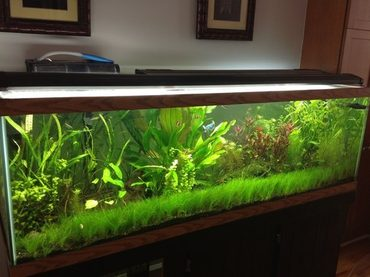 Aquascaping the Aquarium: March 2017 Aquarium Trends