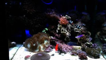 Why is Water Flow So Important in a Reef Tank?