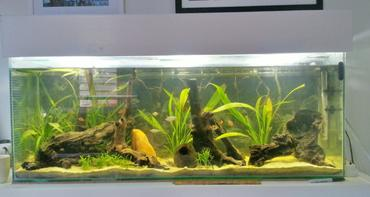 Introduction to Planted Aquariums