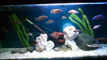 Stocking Fresh Water Fish Tanks