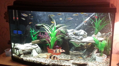 Stacking rocks in your aquarium for African cichlid rock decoration
