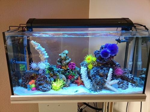 Types Of Saltwater Tanks Fish Only Fowlr And Reef Tanks