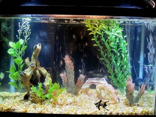 Aquarium decorations for Aquarium decoration tips