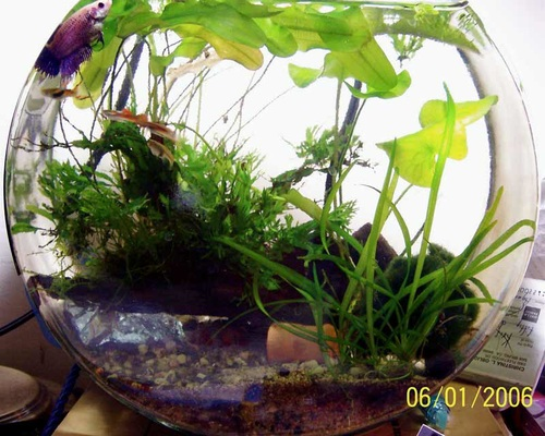 An Overview Of Fish Bowls Ratemyfishtank Com