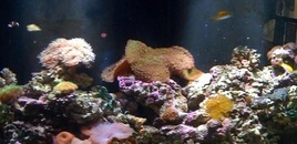 Reef Aquarium by Sunset Aquatics Tempe AZ USA