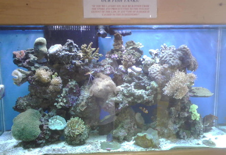 1 of our many reef display tanks 90 gallons