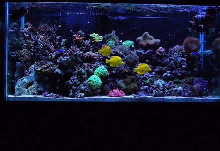 My 90 gallon reef!