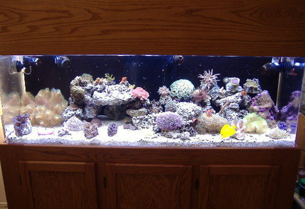 100g mixed reef