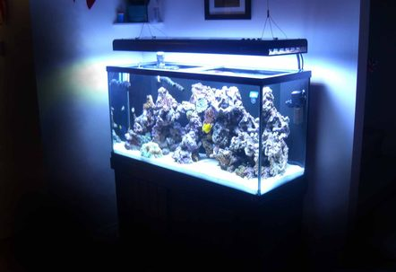 90g 33g sump Aquatinics T5 lighting100lbs LR