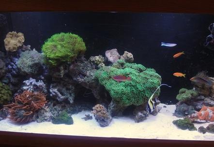 2010 reef