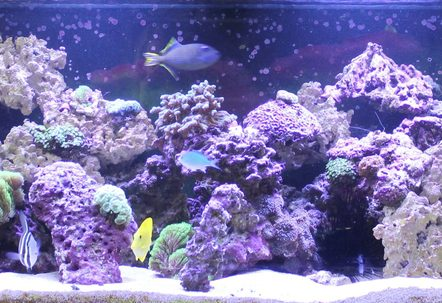 240 gallon reef tank