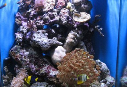 My very first Salt water Reef tank about 4 months old now 150806