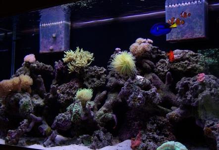 90 Gallon Coral Reef