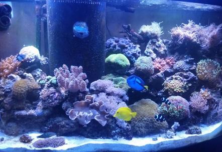 90 gallon reef