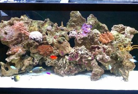 90g reef