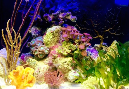 Ive been trying to emulate the lagoonalfringing reef with sponges LPS gorgonians macroalgae seagrass and mixed oolite and crushed coral substrate