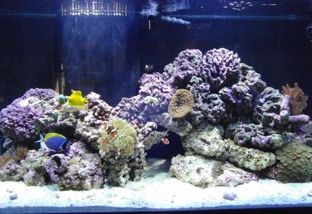 Just setup 012009 Slowly adding corals