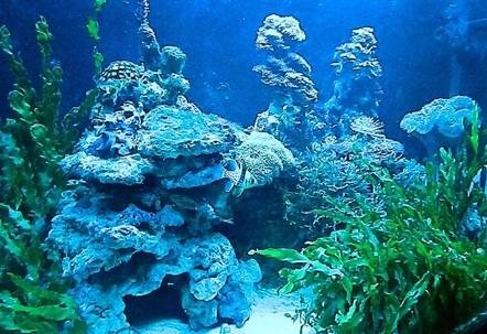 Macro Algae and Coral Tank