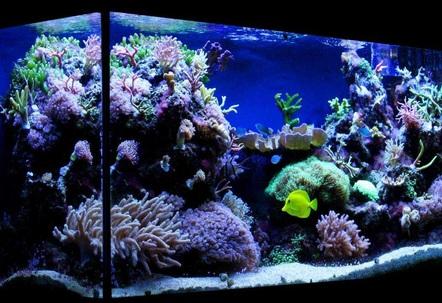My 100 gallon 375L reef tank