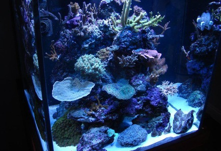 My 60 Gallon cube with SPS LPS Softies and Clams