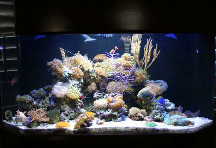 My Passion100 Gallon Corner Reef Tank with live coral and fish My next project a 450 gallon saltwater tank I will post pictures once complete