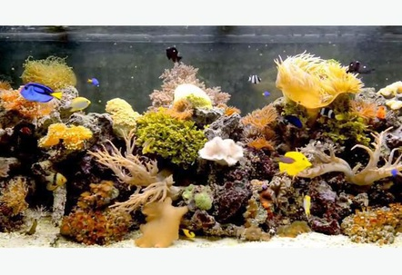 This is a extremely ocean reef display seen as a drop of a ocean indoors