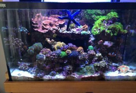 This is a full tank shot of my 30 gallon reef tank