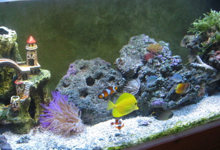 my fish tank two years later