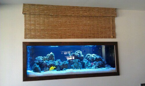 125 Gallon Saltwater Tank by Sunset Aquatics