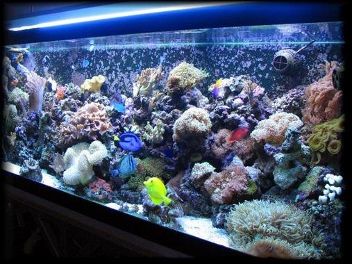 125 gal reef tank