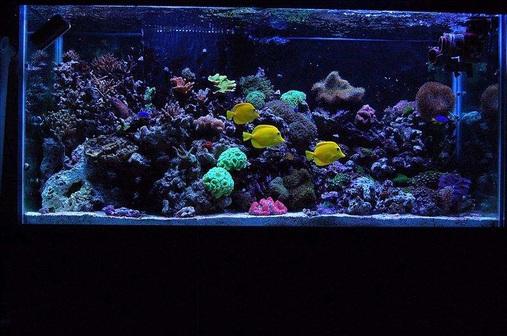 My 90 gallon reef!