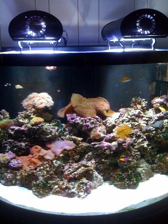 Sunsetaquatics 39 S Saltwater Fish Tanks Photo Id 37767