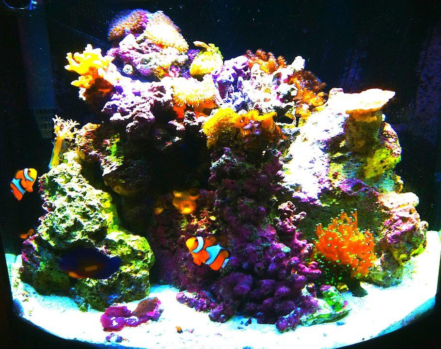Joshmeneses 39 s reef tanks photo id 38960 full version for Nano saltwater fish