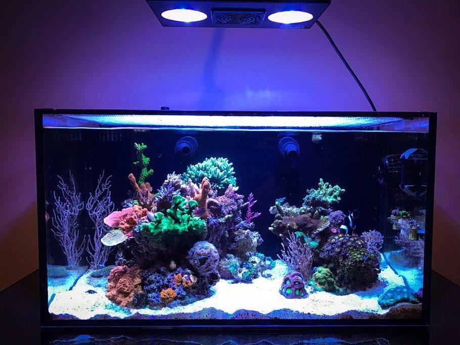 Uwdanno S Reef Tanks Photo Id 43833 Full Version
