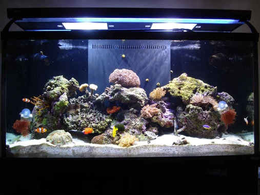 All time top 10 saltwater fish tanks quotes for Best saltwater fishing times