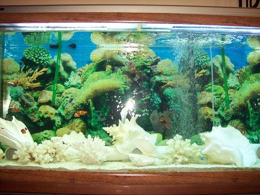 Taylorbear 39 s saltwater fish tanks photo id 34138 full for Fish only saltwater tank