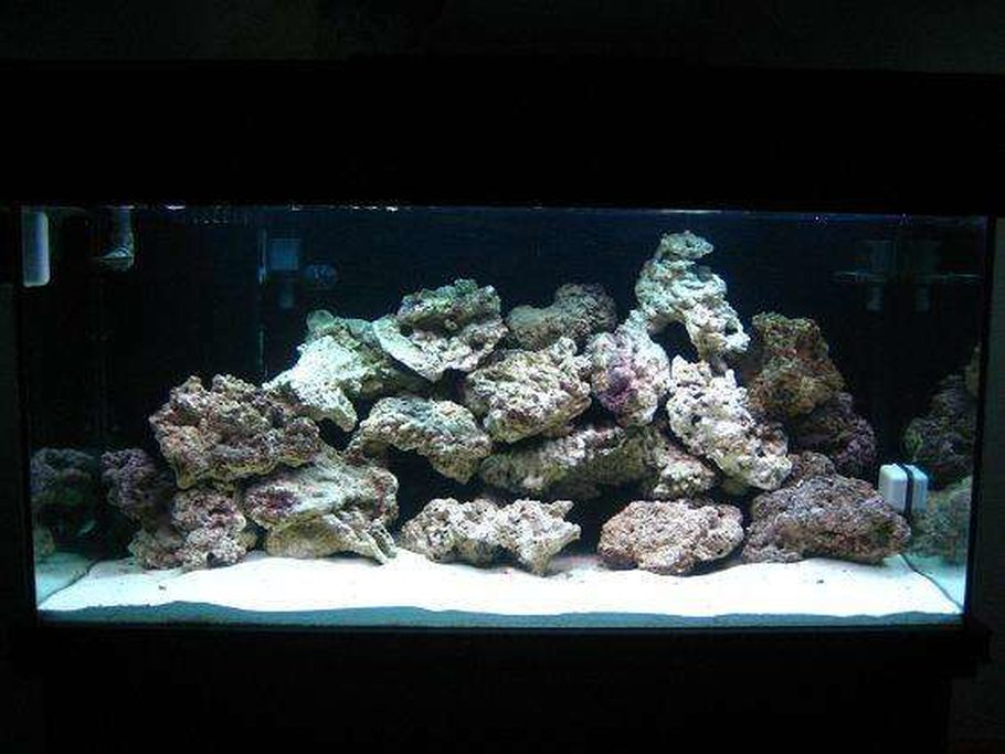 z33nismo 39 s saltwater fish tanks details and photos photo 9005. Black Bedroom Furniture Sets. Home Design Ideas