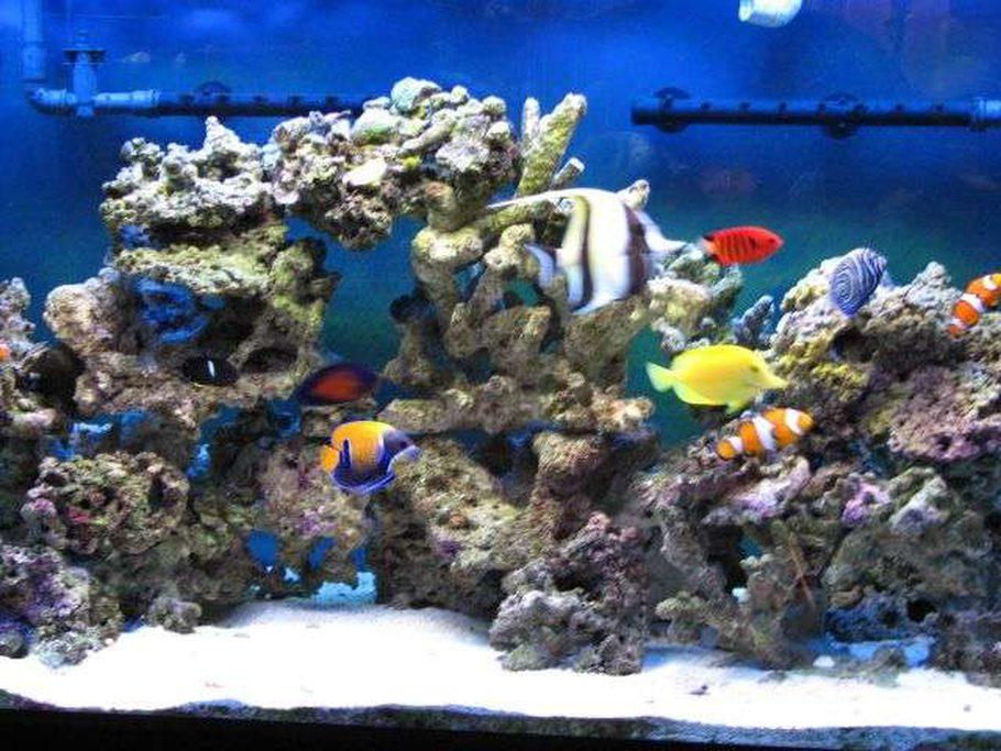 Most Beautiful Saltwater Fish Tanks 2007