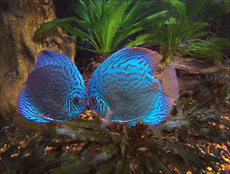 Fish aquarium bottom feeders hot panty tgp for Bottom feeder aquarium fish