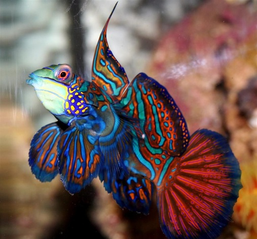 Most beautiful saltwater fish 2008 for Popular saltwater fish