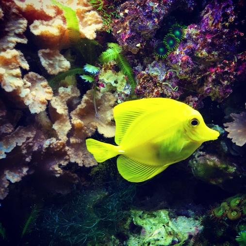 Choosing the correct temperature for a marine aquarium for Tropical fish temperature