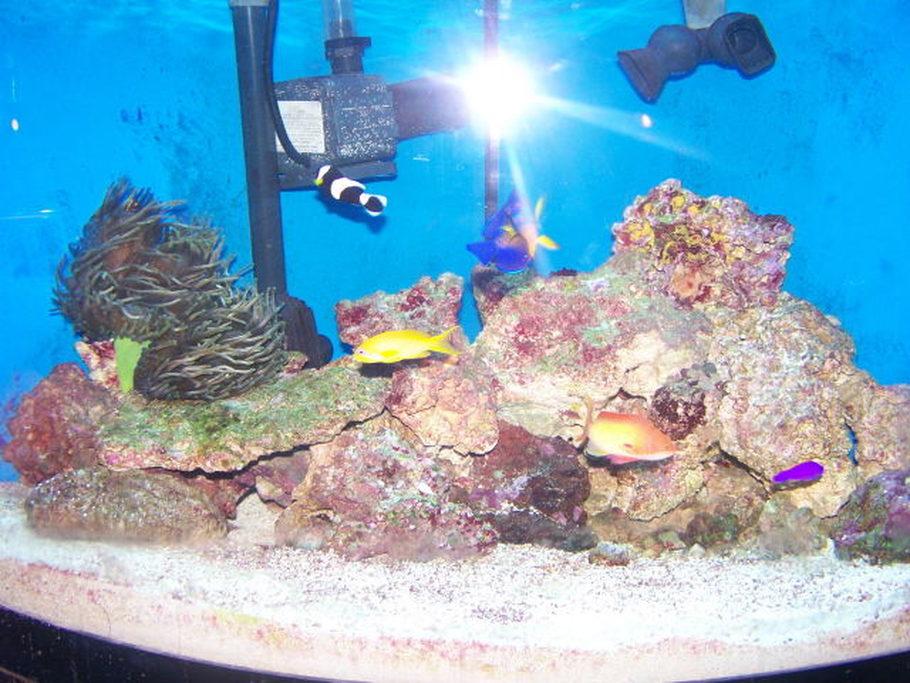 Pretty saltwater fish