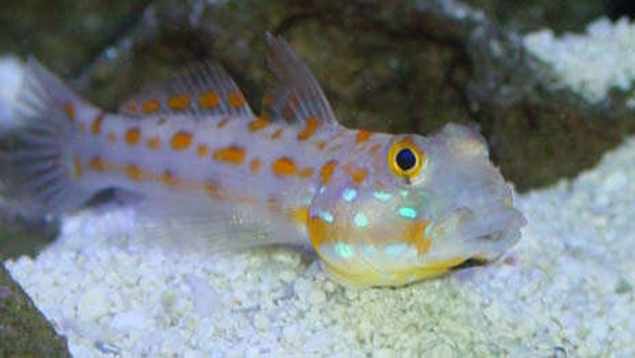 bassettmd 39 s saltwater fish photo id 9729 full version