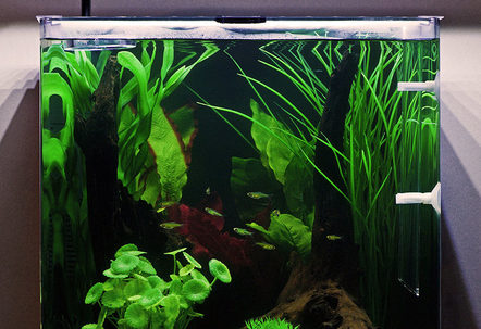 My Aqua One Aspire55 with Green Neon Rasbora
