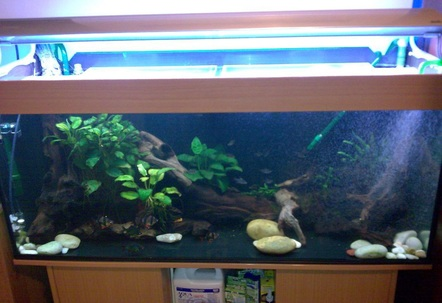 4ft bare bottom tank with wood and large pebblesFluval 305 and Aqua Pro 1 filtersArcadia overhead linghtingJBL Co2 kit